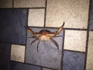 2015年1月11日 久々の福浦で五目釣り…どころではない…!?