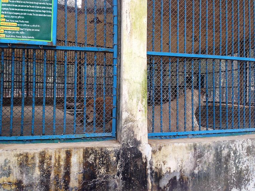 【海外】2016年2月13日 バングラデシュ ダッカ動物園 初釣果!